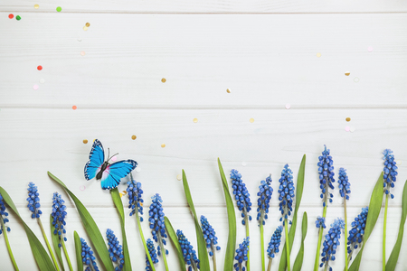 Spring flowers composition for postcard. Muscari on wooden background. Stock Photo