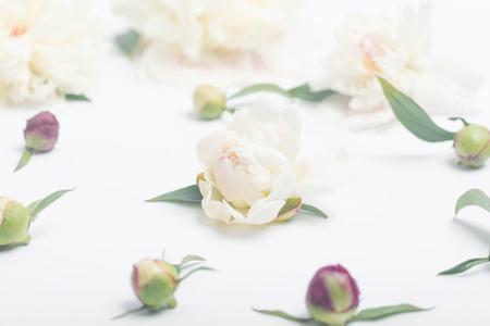 White peony on light background. Stok Fotoğraf