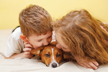 Little boy and girl kissing a puppy jack russell dog.