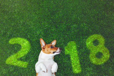 Cute dog jack russel terrier, lying on green grass with number 2018. New year concept.