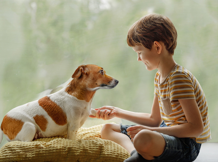 Cute dog looks into the eyes and gives the paw to the child. Friendship, animal protection concept. Stock Photo