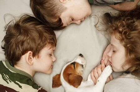 Ð¡hildren's laying and hugging a puppy Jack Russell Terrier.  Animal protection concept. Foto de archivo - 128854009