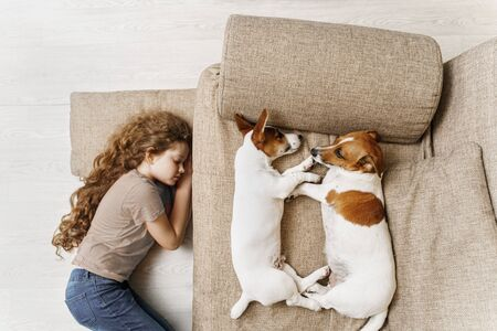 Two Jack Russell are sleeping on the bed, and the owner of the girl is sleeping on the floor. Education, discipline, training concept. Foto de archivo - 128854080