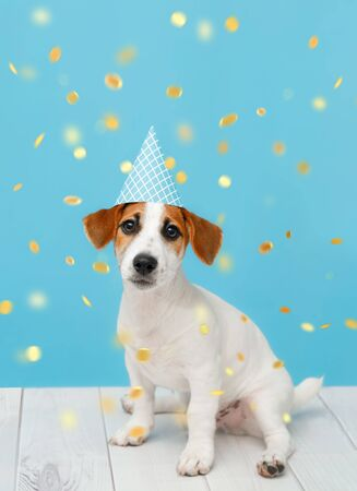 Puppy dog in party hat with  celebrating birthday on vertical banner with space for text.