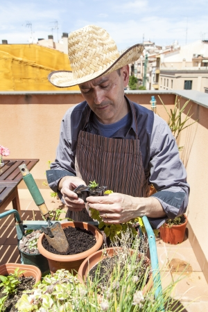 urban gardening: Man potting-on some plant on his urban garden