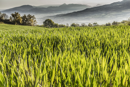 non cultivated land: A green grass field with mountains in the horizon Stock Photo