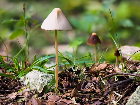Makro of a mushroom with bokeh background