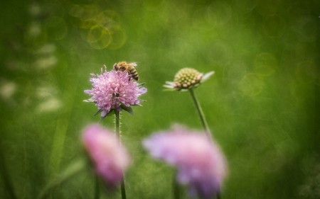 Bee on a flower with meadow bokeh Stock Photo