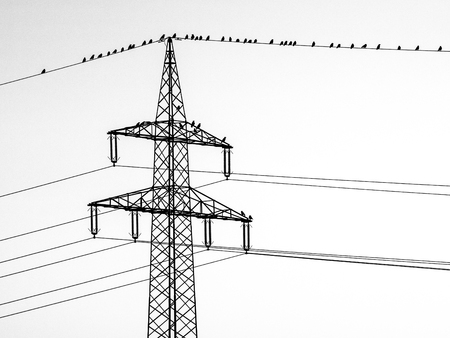 Silhuette of crows sitting on a power line Stock Photo
