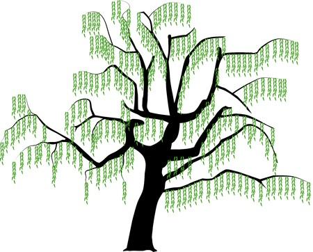Imagen del vector de un árbol en la ilustración de la primavera.