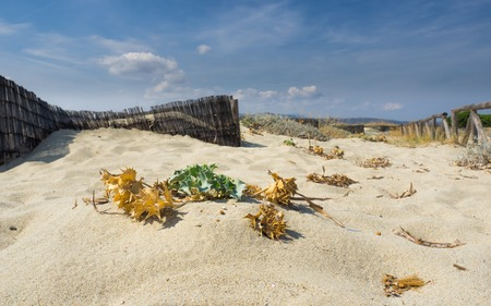 close-up of dry plants on a beach in italy