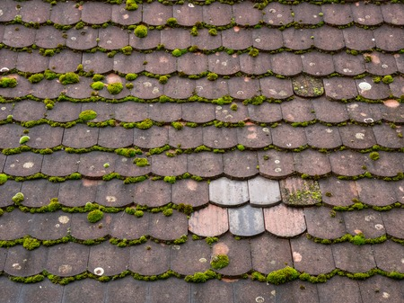 Old mossy roof tiles with a small area of five newer tiles Banco de Imagens