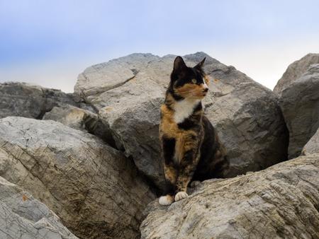 Calico Cat between big rocks