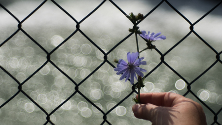 Hand-held purple flower in front of a fence with bubble bokeh