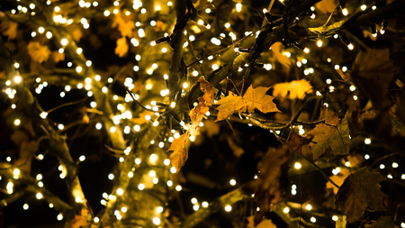 Autumnal tree with fairy lights, focus on single leafs Imagens