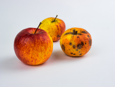 Overripe apples on white background Banque d'images