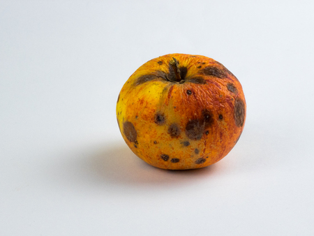 Overripe apple on white background