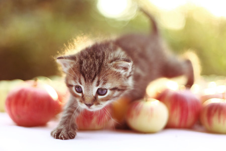 cute kitten: little kitten on the autumn background