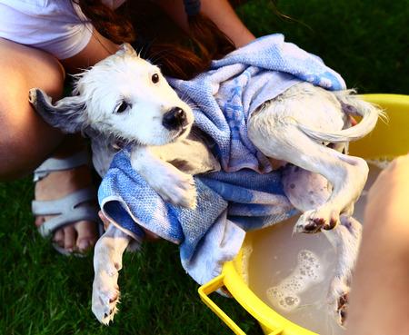 generosa: los niños lavan perrito blanco perdido en el lavabo amarillo en el fondo del jardín de verano