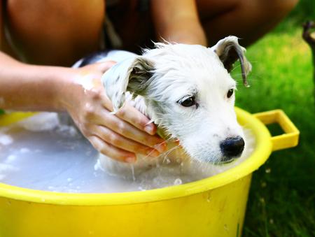 kids wash stray white puppy in yellow basin on the summer garden background
