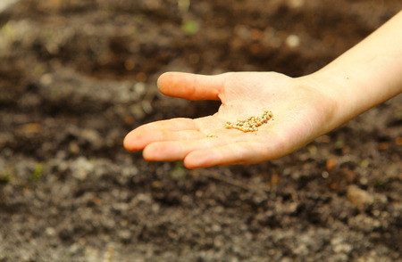 seed bed: hand with seeds on the seed bed background Stock Photo