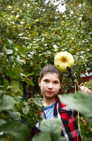 pluck: teen  girl help to pluck apples with special stick