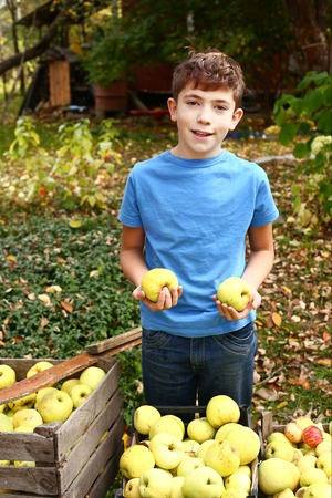 ladder  fence: preteen handsome boy with apples harvest on the autumn garden background