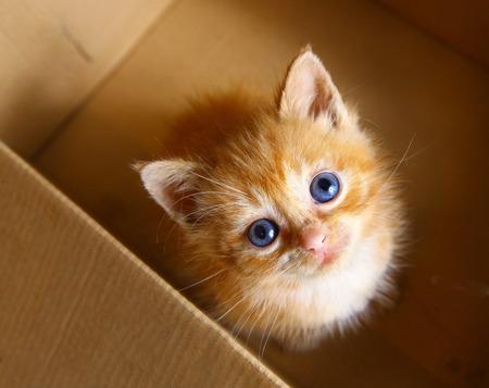 rood haar een maand oud kleine kitten in de doos