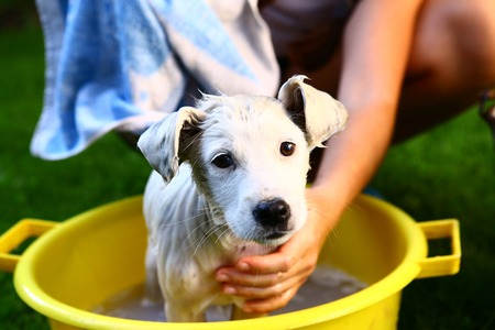 woman bath: ids wash white puppy in the basin on the summer garden background