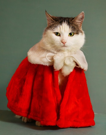 mantel: cool tom cat in santa claus garment mantel with white fur collar sit beside small christmas tree in pot