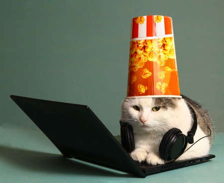 funny picture: funny picture of cat with notebook and headphones