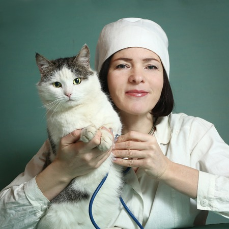 veterinarian woman in uniform and hat with stetoscope and thermometer examin siberian grown up male cat on the table in veterinary clinic center