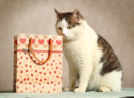 現在バッグ スニッフィングとシベリア男性トム猫