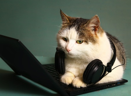 fluffy cat: funny picture of cat lay on copmuter laptop with headphones
