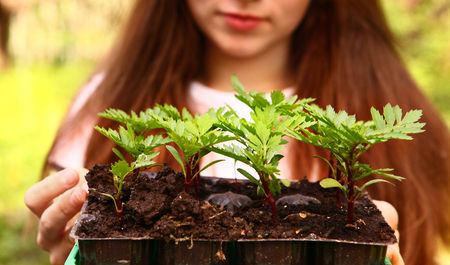 seedlings: teen girl hold spring sprouts in the box close up portrait on summer outdoor background Stock Photo