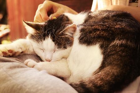 Close-up buiten foto van de kat op schoot met hand en vingers
