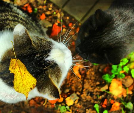 perro asustado: two cats male and femile get acquanted close up photo Foto de archivo