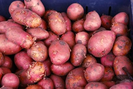 screen savers: red potato close up photo on the market