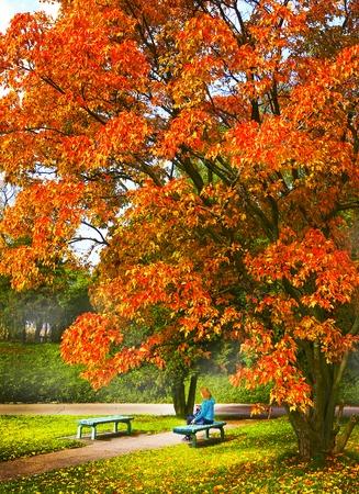 arbol alamo: european fall sceen with poplar tree bench and girl Foto de archivo