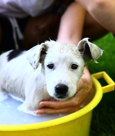 woman bath: kids wash stray white puppy in yellow basin on the summer garden background
