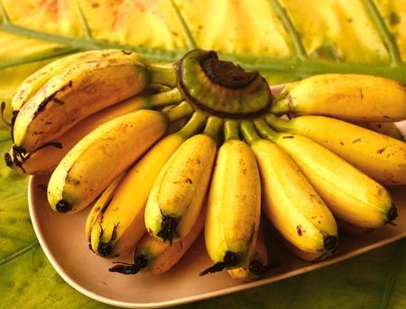 mini banana bunch on palm leaf tree close up photo Stock Photo