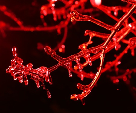 screen savers: frozen icicles on tree branches night scene close up picture, red icicle background