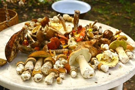 White Mushroom Boletus Eduli. Small Edible White Mushroom Boletus Edulis Lying On Heap Of Forest Wild Mushrooms Close Up. Selective Focus.