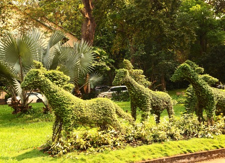 cut horse bushes in vietnam asian park