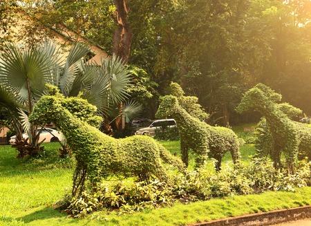 ajutthaya: cut runnung horse bushes in vietnam asian park