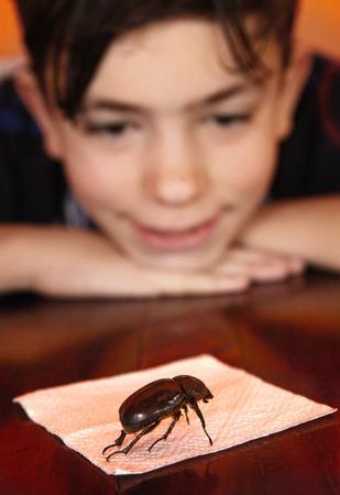 keen teenage boy investigate bug close up photo
