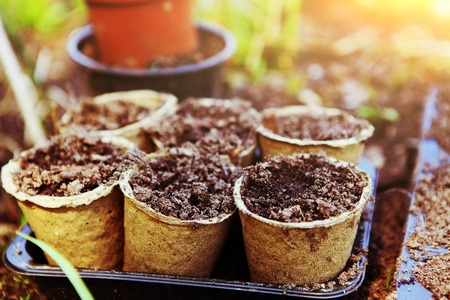 pots with soil for garden sprouts on the spring outdoor country background Stock Photo