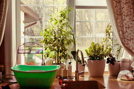 kitchen window with utensils and pot plants, water tap