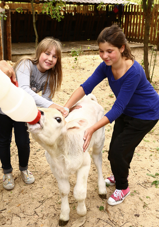 teen girls with white calf feeding him with mild bottle close up photo Stock Photo