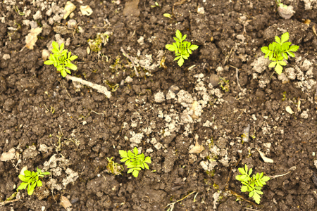 spring sprouts in soil close up photo Banco de Imagens